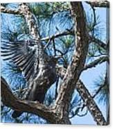 Eagle Flight Prep Canvas Print