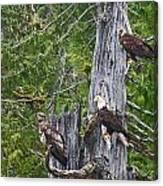 Eagle Gang Canvas Print