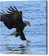 Eagle Grab Canvas Print