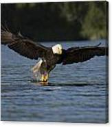Eagle In Action Series Canvas Print