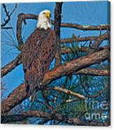 Eagle In Oil Canvas Print