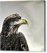Eagle In The Mist Canvas Print