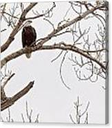 Eagle In Tree Canvas Print