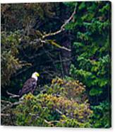 Eagle In Trees  Canvas Print