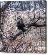 Eagle Landing 1 Canvas Print