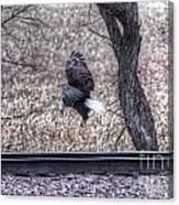 Eagle Landing 2 Canvas Print