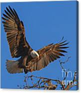 Eagle Landing Canvas Print
