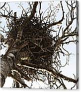 Eagle Nest Canvas Print