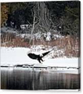 Eagle On The Shoreline Canvas Print