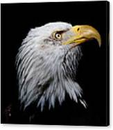 Eagle Portrait II Canvas Print