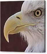 Eagle Portrait Freehand Canvas Print