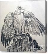 Eagle Sketch Canvas Print