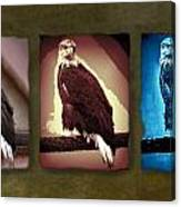 Eagle Triad Canvas Print