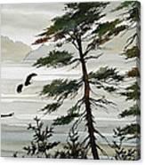 Eagles Eden Canvas Print