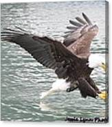 Eagle's Grasp Canvas Print