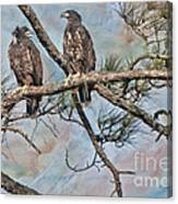 Eaglets In Oil Canvas Print