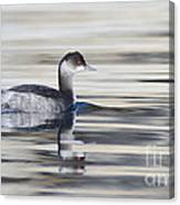 Eared Grebe Canvas Print