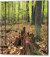 Early Autumn Woods Canvas Print
