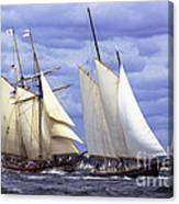 Early Contenders Canvas Print