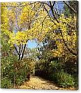 Early Fall 1 Canvas Print