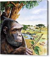 Early Hominid Canvas Print