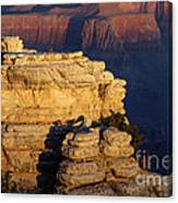 Early Light In The Canyon Canvas Print