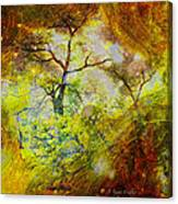 Early Morning Cypress Abstract Canvas Print