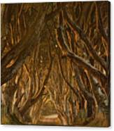 Early Morning Dark Hedges Canvas Print