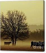 Early Morning Fog 008 Canvas Print