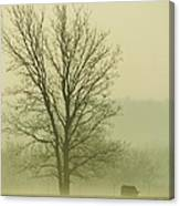 Early Morning Fog 016 Canvas Print