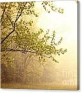 Early Morning Fog Canvas Print