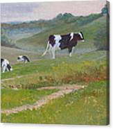Early Morning Holsteins Canvas Print