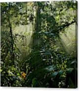 Early Morning Light In The Rain Forest Canvas Print