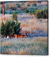 Early Morning Prowler Canvas Print