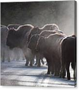Early Morning Road Bison Canvas Print