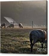 Early Morning Sheep Canvas Print