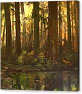 Early Morning Sun On Cannock Chase Canvas Print