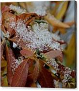 Early Snow On Rhododendron Canvas Print