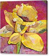 Early Spring IIi  Daffodil Series Canvas Print