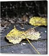 Early Start To Autumn Canvas Print