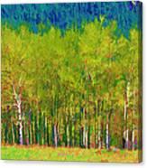 Early Summer Aspen Canvas Print