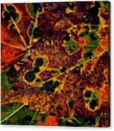 Early To Fall Canvas Print