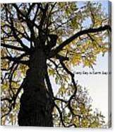 Earth Day Special - Ancient Tree Canvas Print