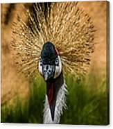 East African Crowned Crane Square Format Canvas Print
