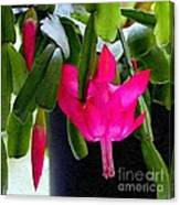 Easter Cactus Digtial Painting Square Canvas Print