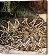 Easter Diamond Back Rattlesnake Canvas Print