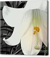 Easter Lily II Canvas Print