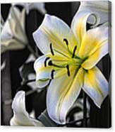 Easter Lily On Black Canvas Print