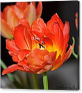 Easter Parrot Tulips Canvas Print