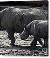 Eastern Black Rhinos Mama N Baby Canvas Print